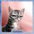 Настя Дергачёва's avatar