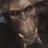 IamDoom1234 RBLX's avatar