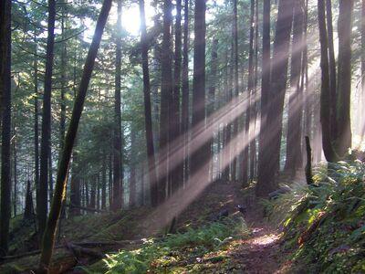 Oregon Forest.jpg