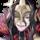 Iago: Nohr's Tactician