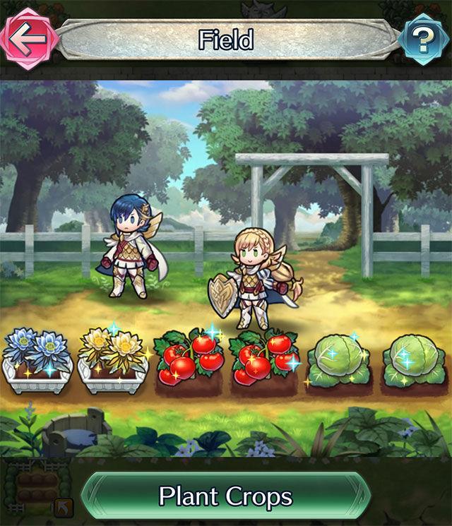 Update Field Tomato.jpg