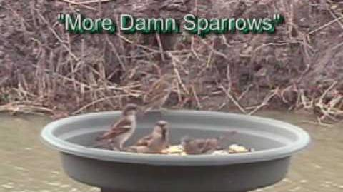 Bird Feeder (Green Jay, Kiskadee and..