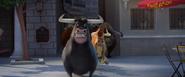 Bulls attack