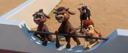 Calves watching truck