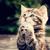 Kitten of Seeker