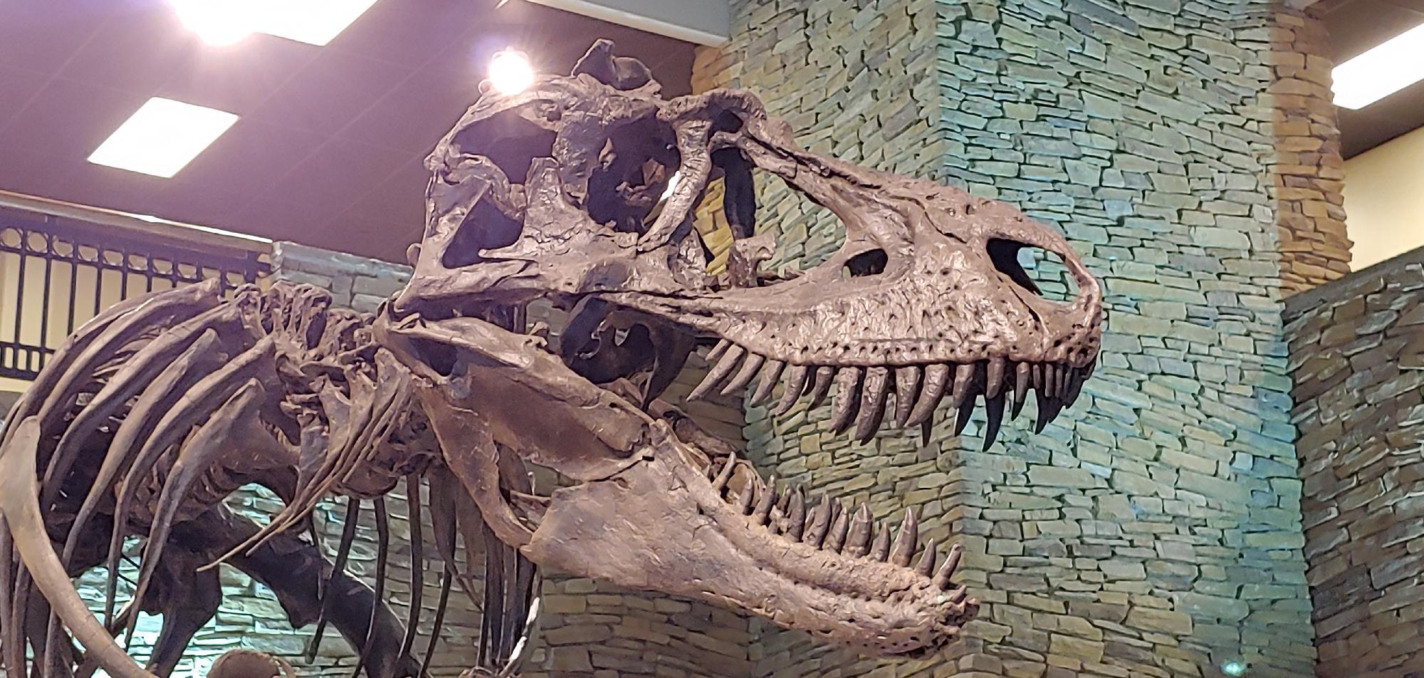 Top 10 Individual Dinosaur Specimens
