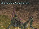 Scissorleg Xerin