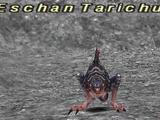 Eschan Tarichuk
