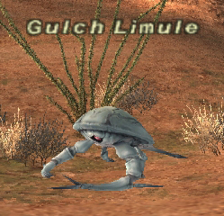 Gulch Limule