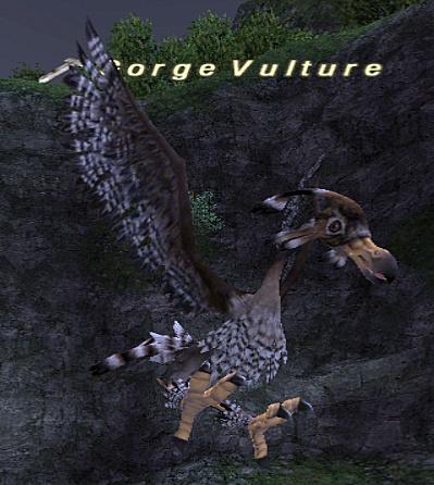 Gorge Vulture