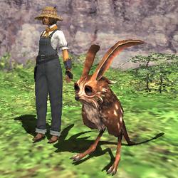 Rearing-rabbit