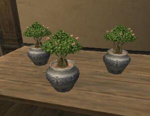 Treesaplings.jpg