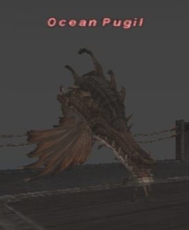 Ocean Pugil