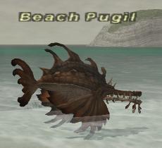 Beach Pugil