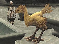 Aug.22-2006 Chocobo Raising01.jpg