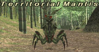 Territorial Mantis