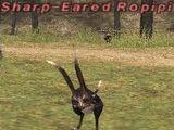 Sharp-Eared Ropipi