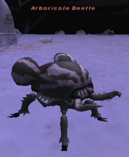 Arboricole Beetle