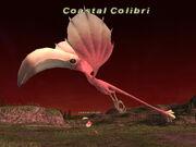 Coastal Colibri.jpg