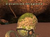 Coralline Uragnite