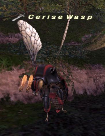 Cerise Wasp