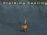 Stalking Sapling