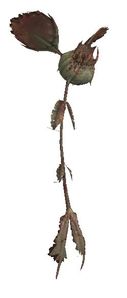 Flytrap (MON)