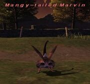 Mangy-tailed Marvin.jpg