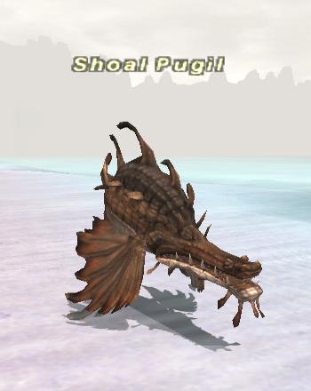 Shoal Pugil