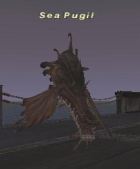 Sea Pugil