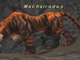 Machairodus