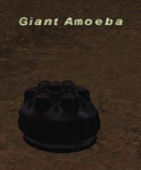 Giant Amoeba