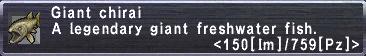 Giant Chirai