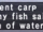 Ancient Carp