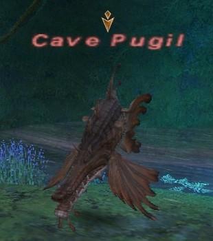 Cave Pugil