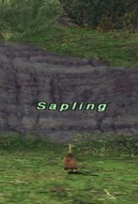 Rearing-sapling.png