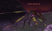 Jaculus.png
