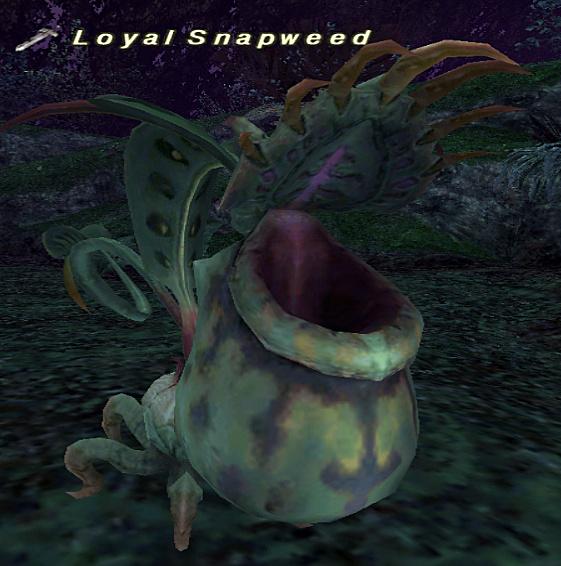 Loyal Snapweed