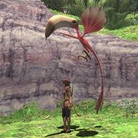 Rearing-colibri.png