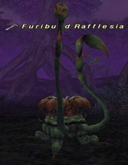 Furibund Rafflesia