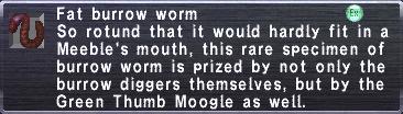 Fat Burrow Worm