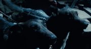 TheTerminator1984Dogs.png