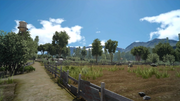 Saxham Outpost overgrown fields from FFXV.png