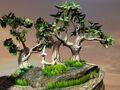 Unused FFIX Tree Test Roozbeh 2