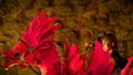 Iris-Chocobo-FFXV
