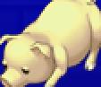 TAY PSP Edward Pig Portrait