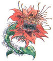 FFII - Amano Death Flower (color)