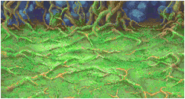 FFII Background Tropical Island