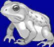 TAY PSP Frog Portrait 4