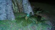 Мирлвудский святлячок ФФ15.jpg
